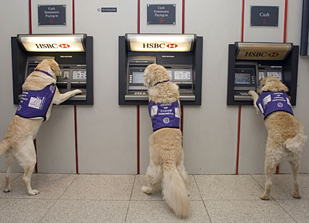 Dogs Can Get Money From Cash Machines (ATM) For Disabled Peoples » image 1