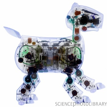 Toy Robot Dog  » image 1