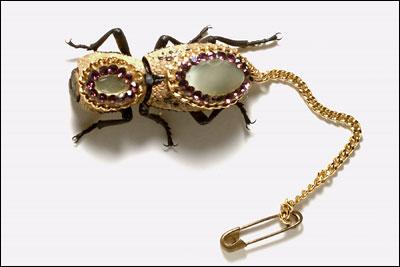 Living Jewelry - Tenebrionid beetle » image 1